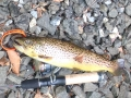 Trout on!