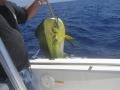 Cayman Catch