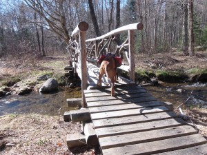 Into Siamese Wilderness Ponds