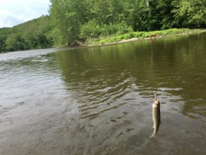 Housatonic River Catch…