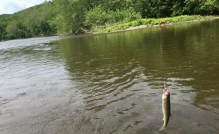 Housatonic River Catch…